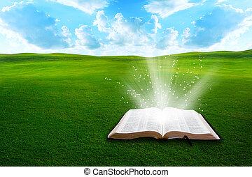 bijbel, op, grassig, akker