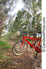 bike in forest