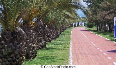 Bike Path and Palm Trees in the Resort in the City - Bike...