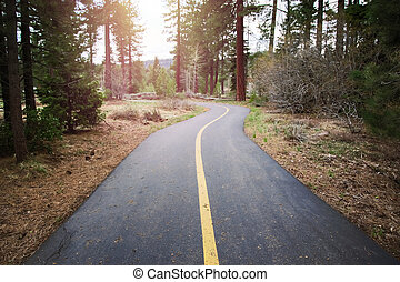 Two lane asphalt bike path in the forest