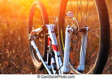 repairing mountain bike in the forest - Bike repair....