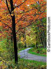 Bike trail through colorful trees in the autumn time