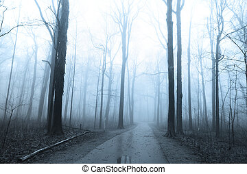 Bike trail through tall trees in morning fog.