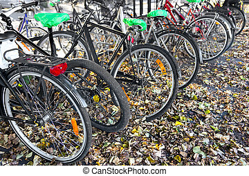 Bikes in autumn leaves