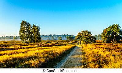 Biking through the Ermelose Heide