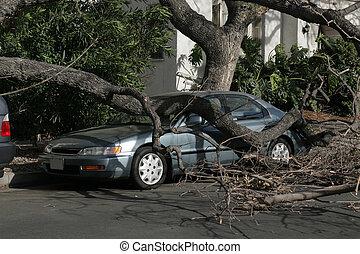 bil, snärjet, under, fallen träd, efter, linda, storm., los...
