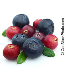 Bilberry and cranberry on a white background