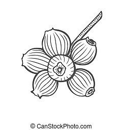 Bilberry vector illustration