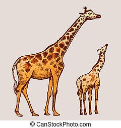 bild, giraffe, kunst