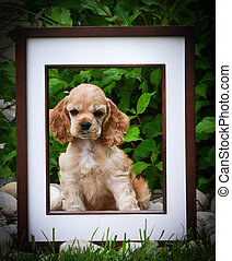 bild, perfekt, junger hund