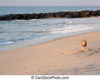 bild, perfekt, setzen szene strand