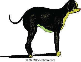 bild, vektor, hund, weiß bac
