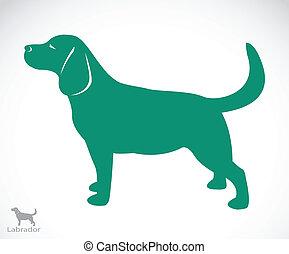 bild, vektor, labrador, hund