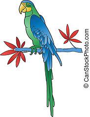bild, vektor, papagai