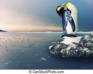 bild, von, a, pinguin