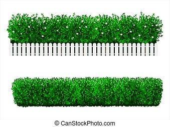 bilda, buske, grön, häck