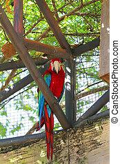 bilder, von, schöne , gefärbt, papagai, in, a, zoo.