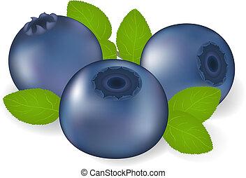 Billberry With Leaves - Billberry With Leaves, Isolated On...