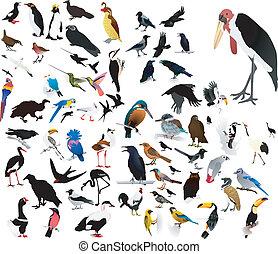 billederne, i, fugle