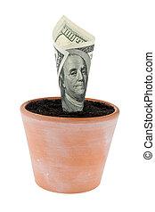 billet dollar, dans, fleur, pot., taux intérêt, growth.