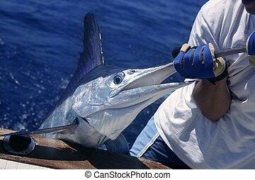 billfish, marlin, coger, liberación, blanco, barco