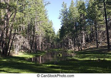 Billie Creek Pond