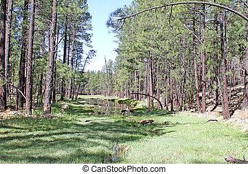 Billy Creek on Trail 633