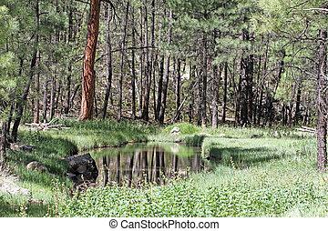 Billy Creek Pond Trail 633