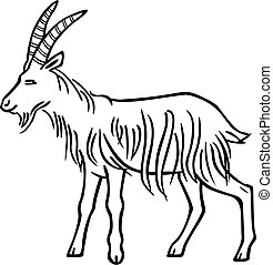 Billy Goat - vector drawing of a billy goat with straight...