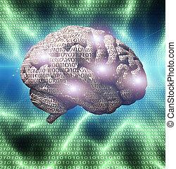 binär, hjärna