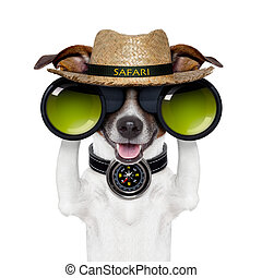binóculos, compasso, cão, safari, observar