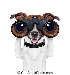 binóculos, olhar, observar, procurar, cão