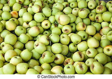 Bin of Green Apples After Fall Harvest