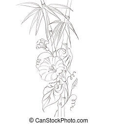 bindweed, flor, bamboo.