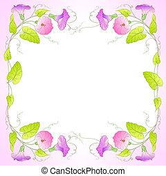 bindweed., quadro, flores