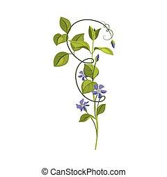 Bindweed Wild Flower Hand Drawn Detailed Illustration. Plant...