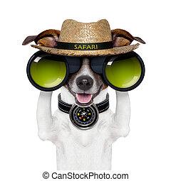 binocolo, safari, bussola, cane, osservare