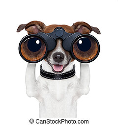 binoculares, mirar, observar, buscando, perro