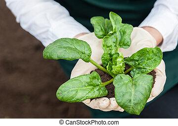 bio, cibo, production.