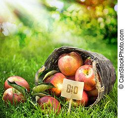 bio, klasyfikowany, zdrowy, zagroda, jabłka, świeży