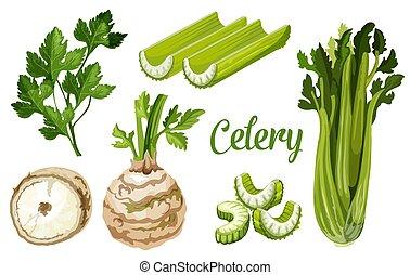 bio, knol, organisch, blad, boerderij, wortel, selderij, ...