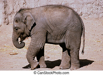 bio, park, -, wandeling, elefant, baby, dierentuin