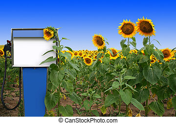 BioDiesel Contest - an old gas tank in a field of sunflowers