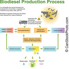 biodiesel, produktion, process.
