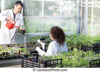 biolodzy, szklarnia, rozsady