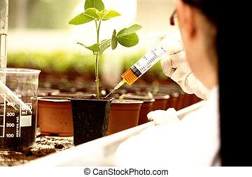biologe, pruefen, wachstum, pflanzenkeim