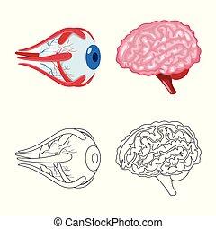 biologi, illustration., skylt., objekt, isolerat, kollektion...