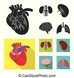 biologi, sätta, vetenskaplig, objekt, isolerat, vektor, ...