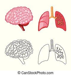 biologi, vetenskaplig, symbol, objekt, web., isolerat, ...