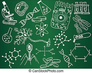 biologia, szkice, na, szkoła, deska